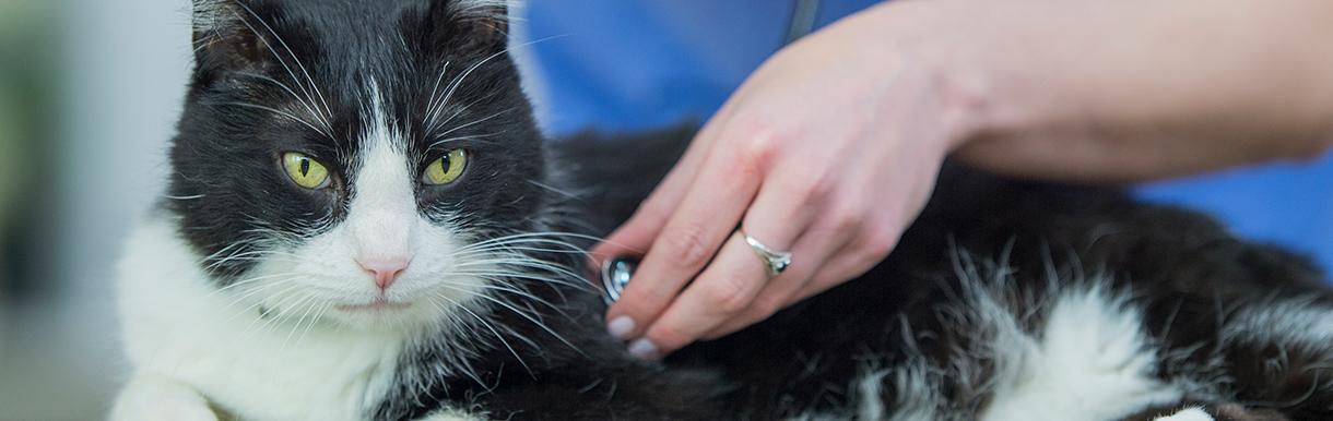 May 2021 is Veterinary Nursing Awareness month
